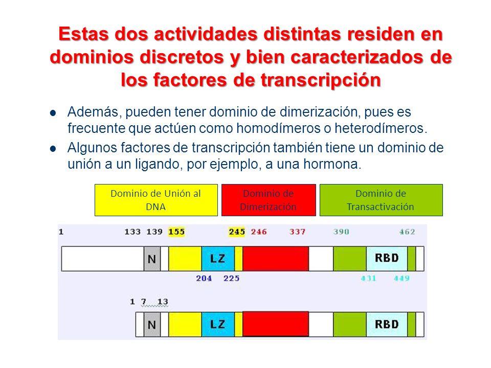 Estas dos actividades distintas residen en dominios discretos y bien caracterizados de los factores de transcripción