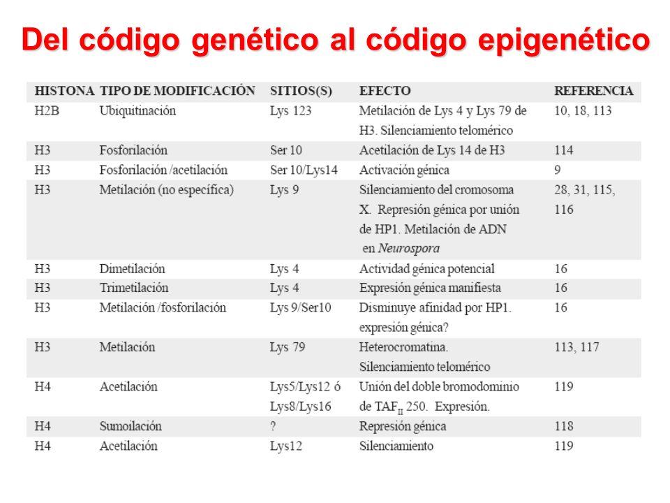 Del código genético al código epigenético