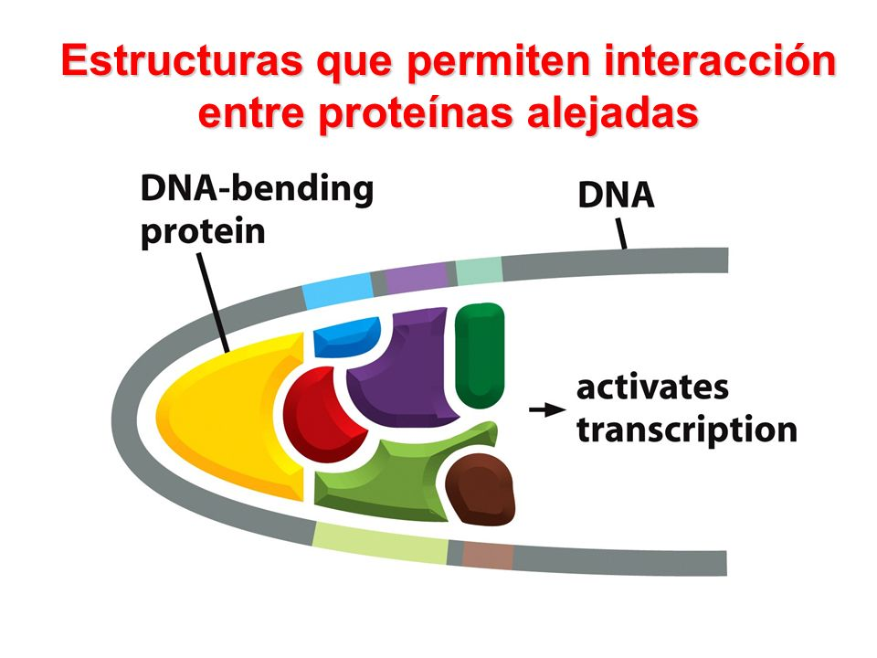 Estructuras que permiten interacción entre proteínas alejadas