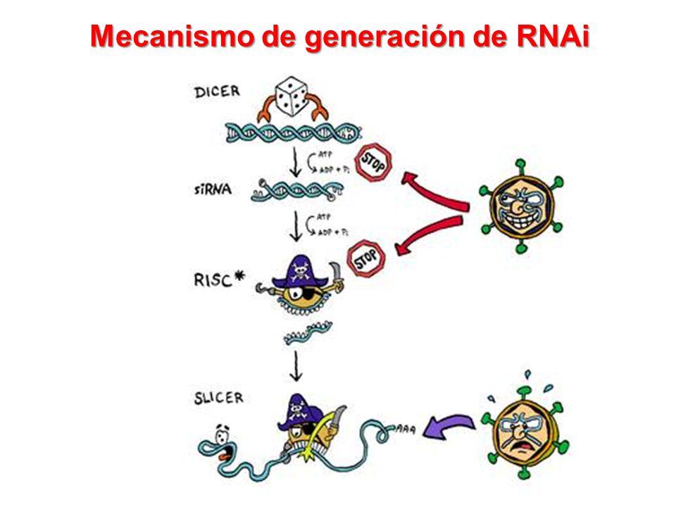 Mecanismo de generación de RNAi