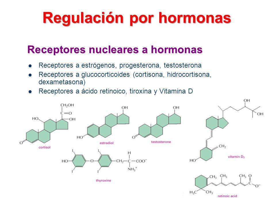 Receptores nucleares a hormonas