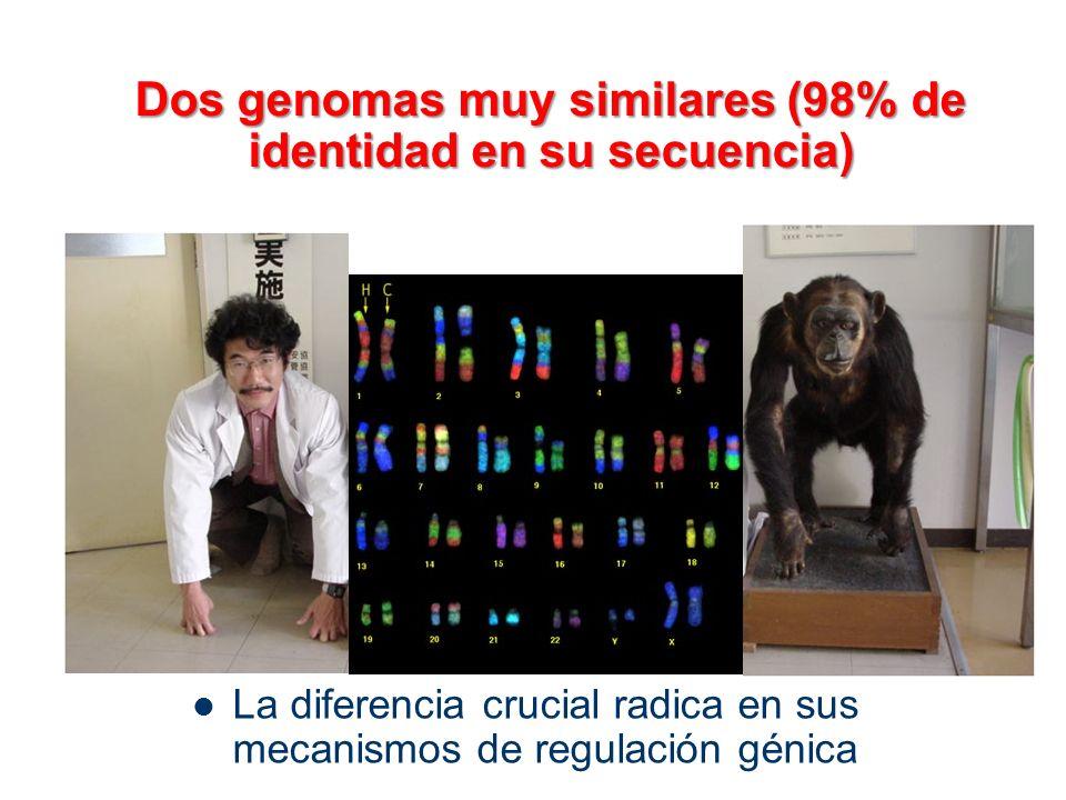 Dos genomas muy similares (98% de identidad en su secuencia)