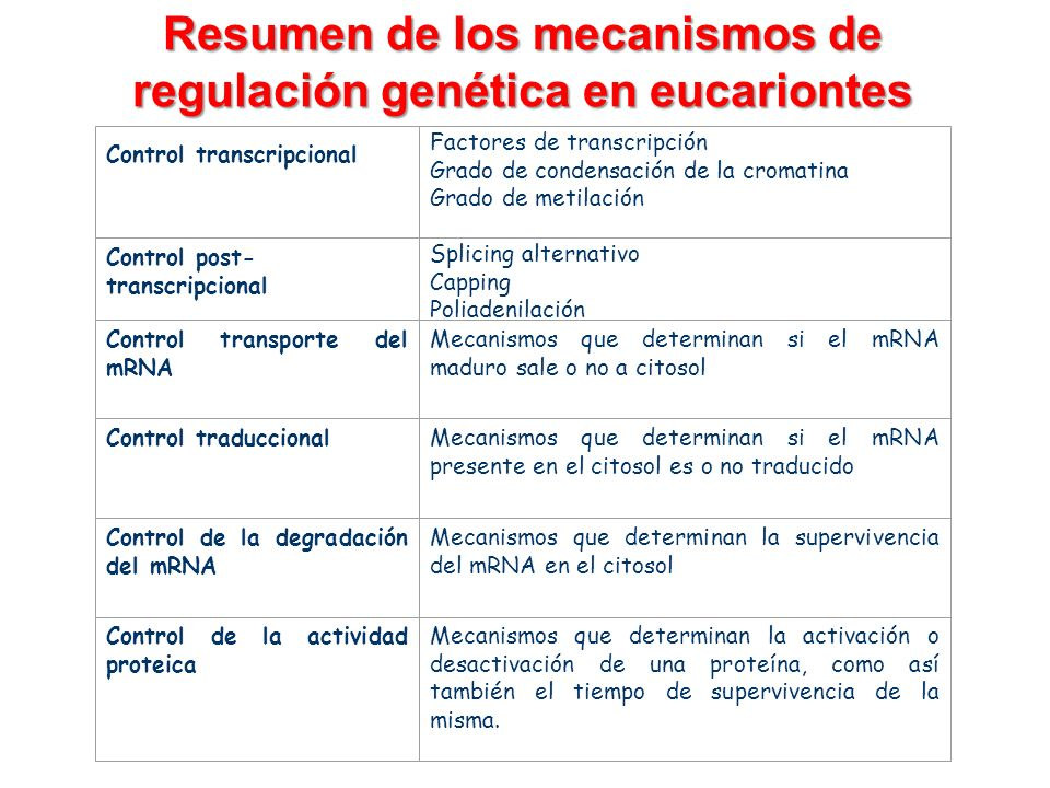 Resumen de los mecanismos de regulación genética en eucariontes