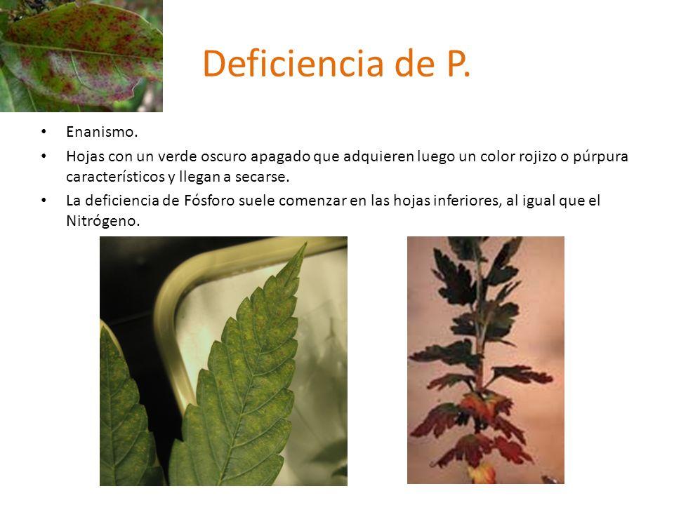 Deficiencia de P. Enanismo.