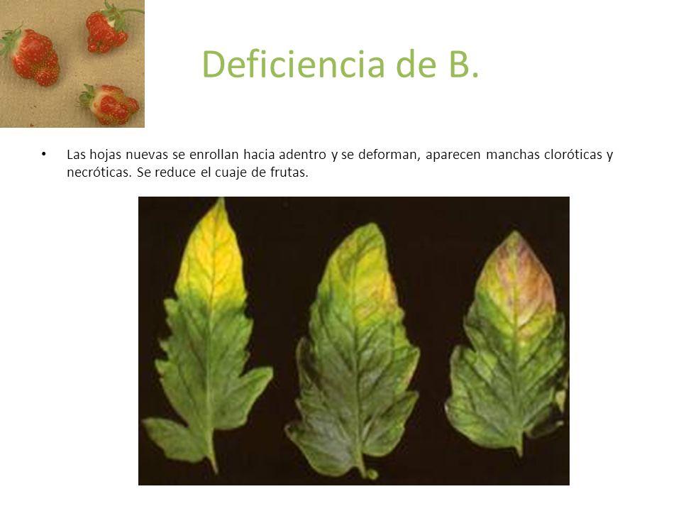 Deficiencia de B.
