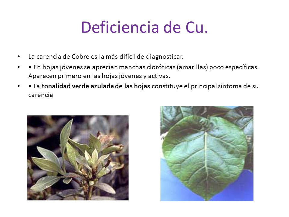 Deficiencia de Cu. La carencia de Cobre es la más difícil de diagnosticar.