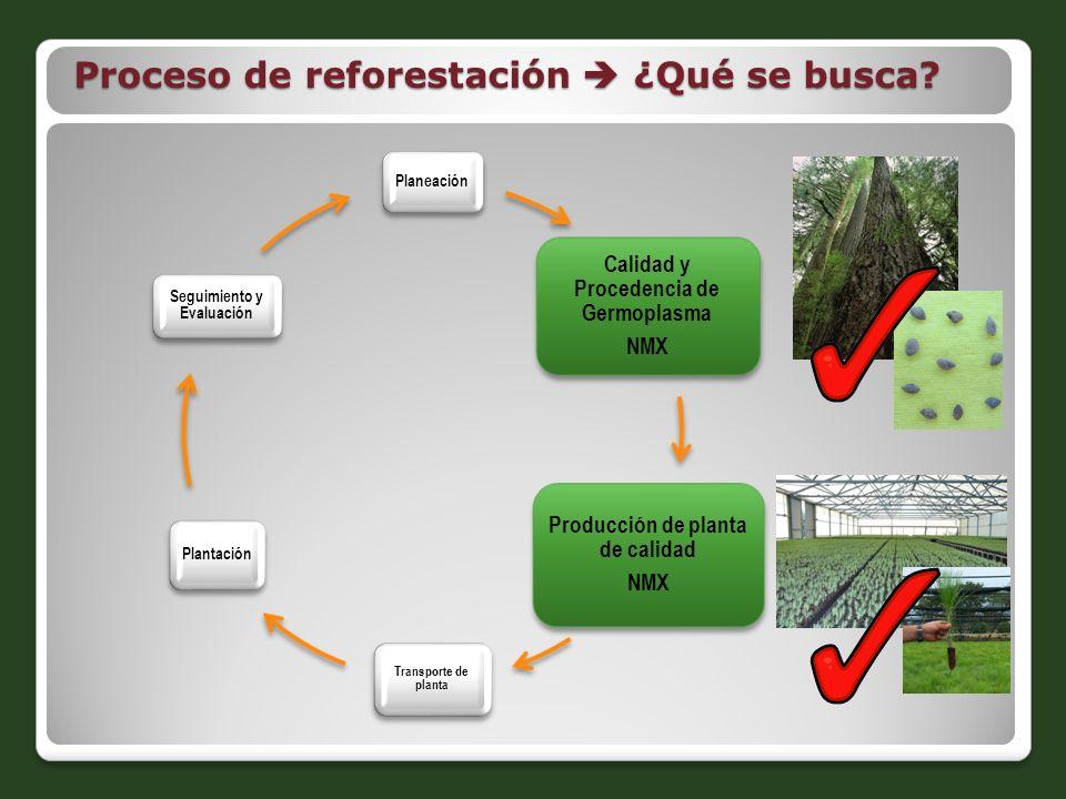Proceso de reforestación  ¿Qué se busca