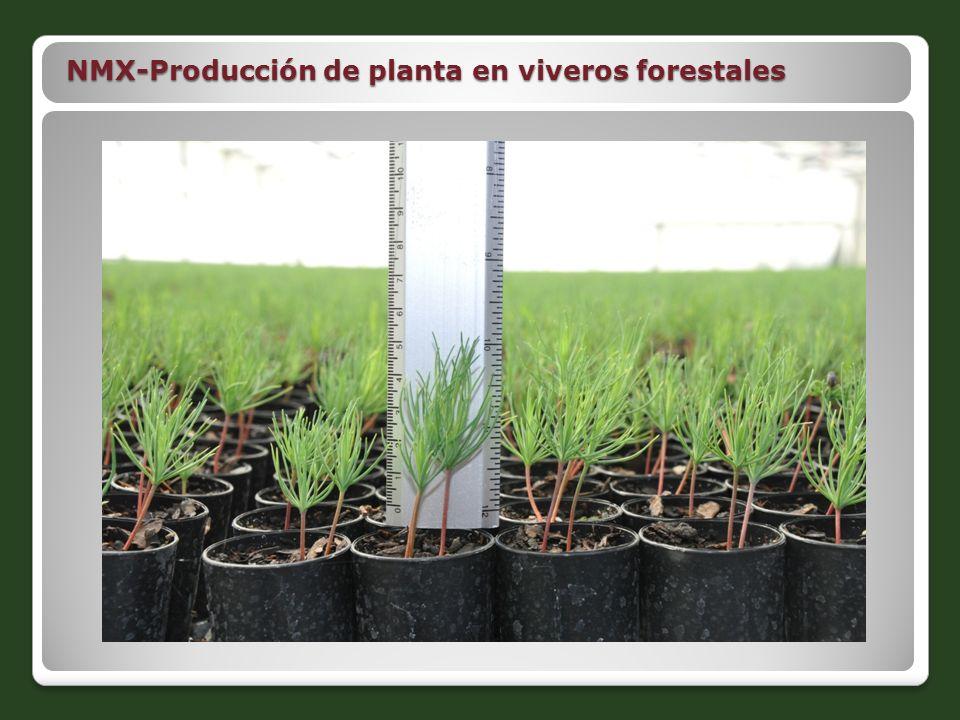 Proyectos de norma nmx ppt descargar for Produccion de plantas en vivero pdf