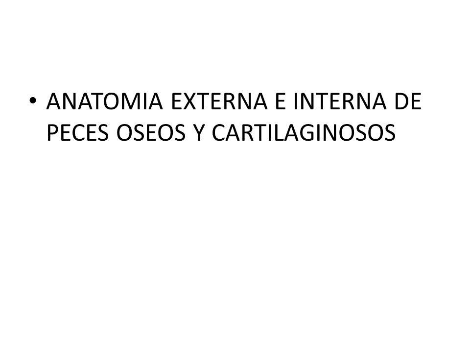 ANATOMIA EXTERNA E INTERNA DE PECES OSEOS Y CARTILAGINOSOS