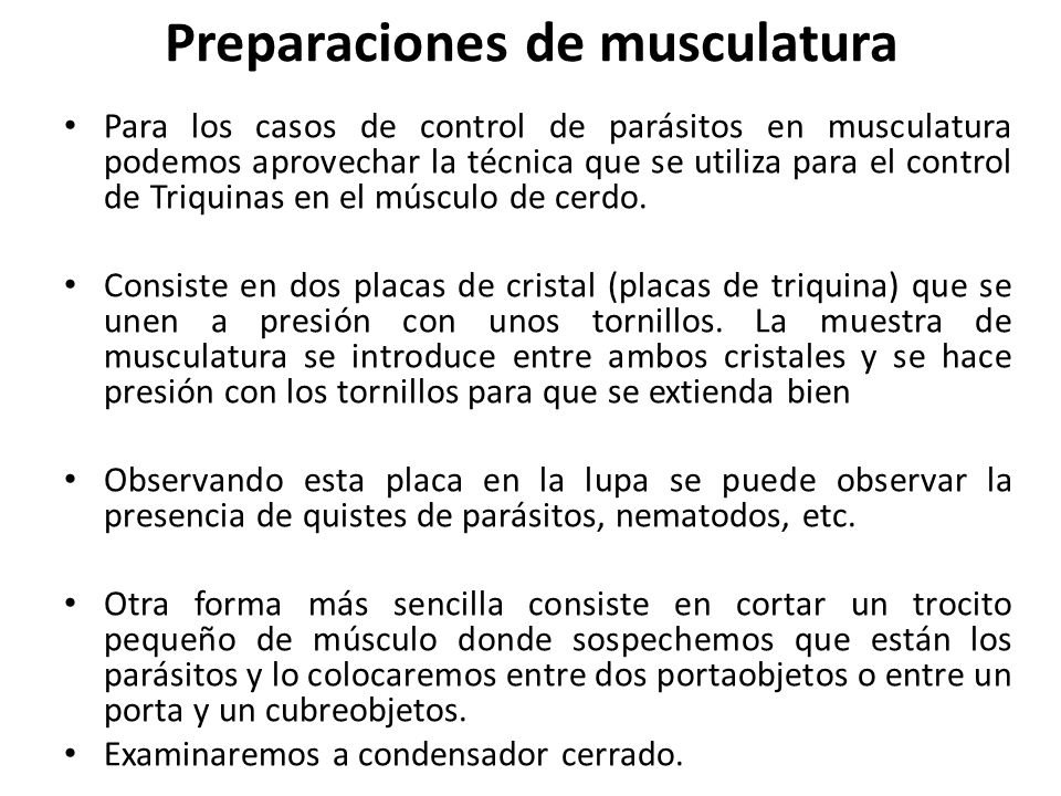 Preparaciones de musculatura