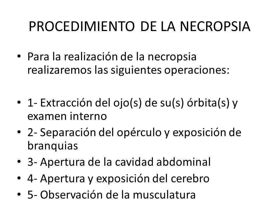 PROCEDIMIENTO DE LA NECROPSIA
