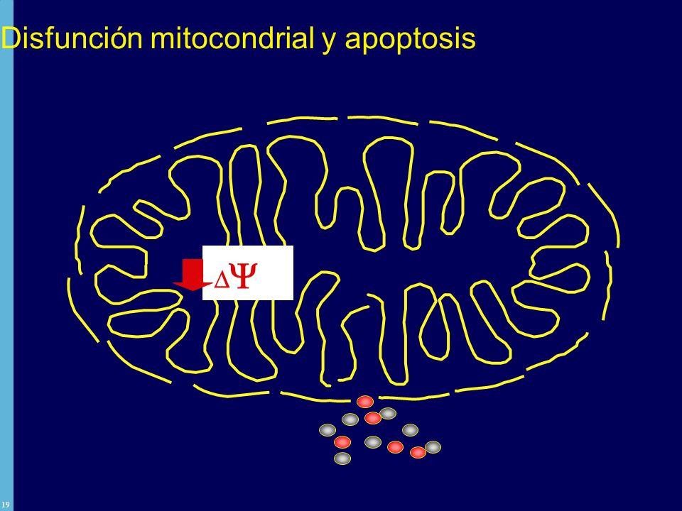 Disfunción mitocondrial y apoptosis