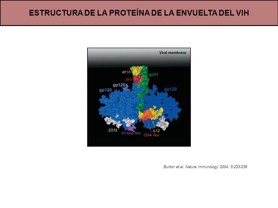 ESTRUCTURA DE LA PROTEÍNA DE LA ENVUELTA DEL VIH