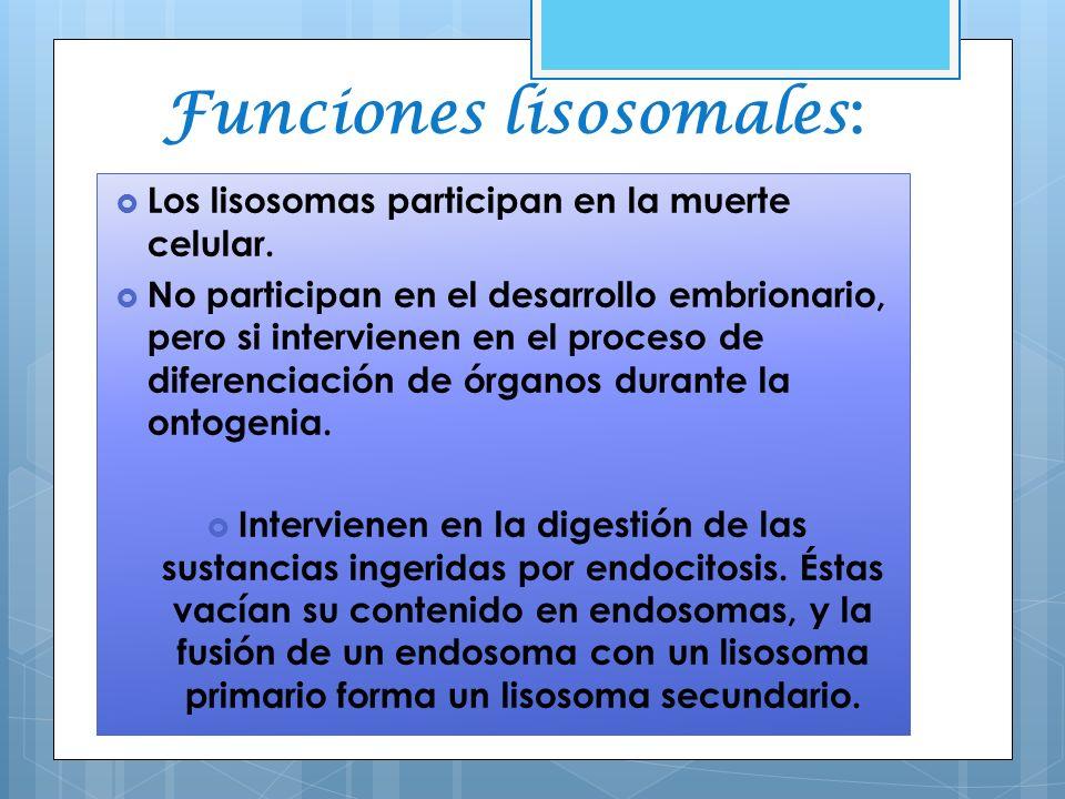 Funciones lisosomales: