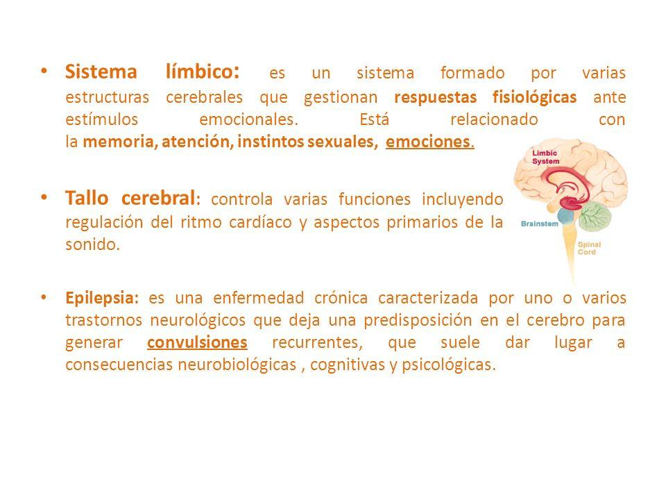 Sistema límbico: es un sistema formado por varias estructuras cerebrales que gestionan respuestas fisiológicas ante estímulos emocionales. Está relacionado con la memoria, atención, instintos sexuales, emociones.