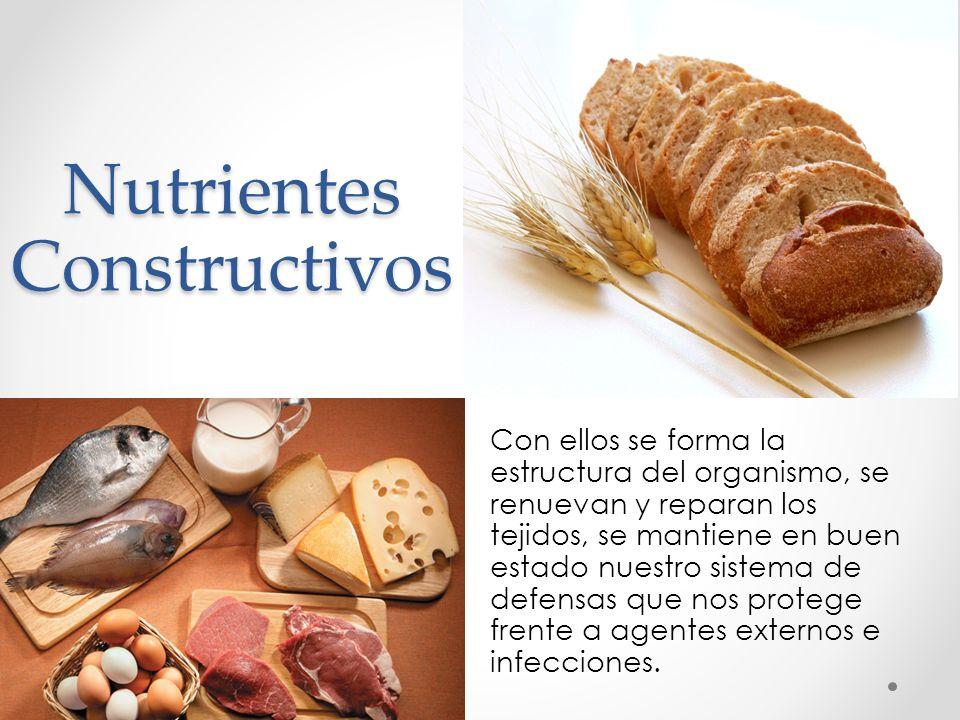 Nutrientes Constructivos