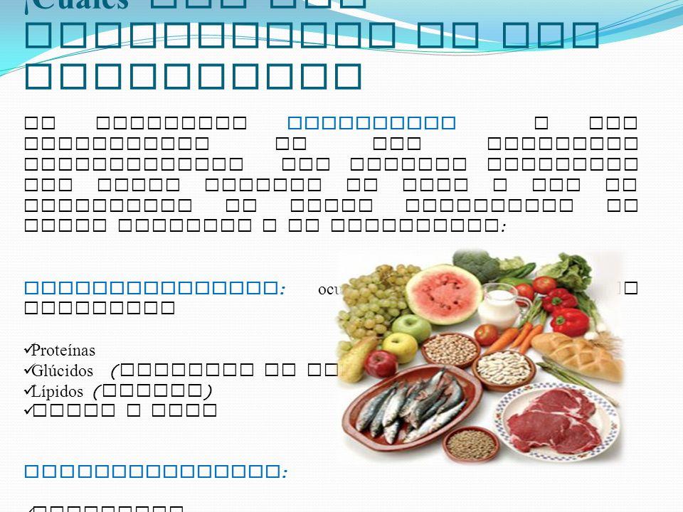 ¡Cuáles son los Componentes de los Alimentos