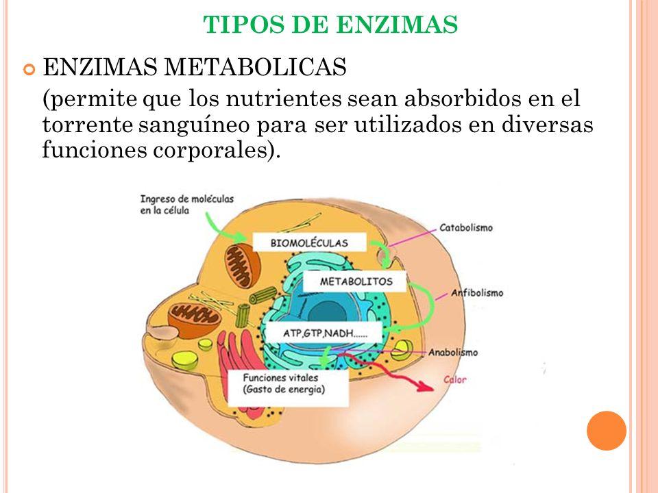 TIPOS DE ENZIMAS ENZIMAS METABOLICAS.