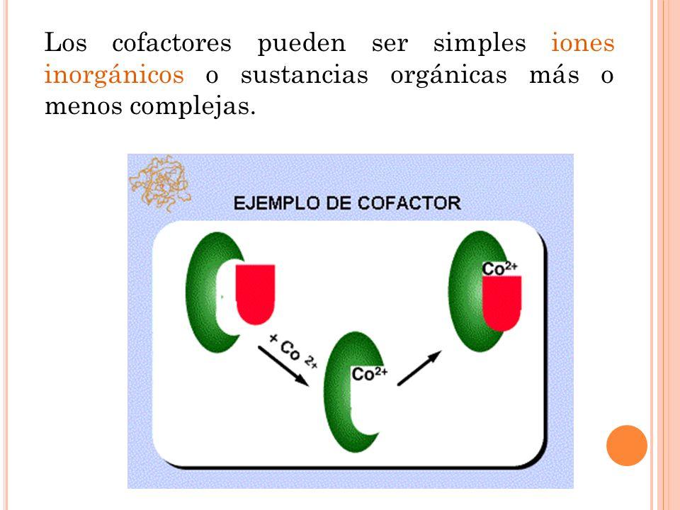 Los cofactores pueden ser simples iones inorgánicos o sustancias orgánicas más o menos complejas.