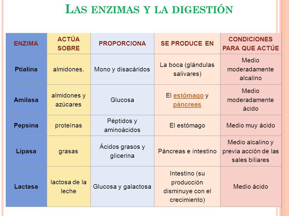 Las enzimas y la digestión Condiciones para que actúe