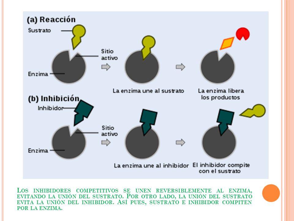 Los inhibidores competitivos se unen reversiblemente al enzima, evitando la unión del sustrato.