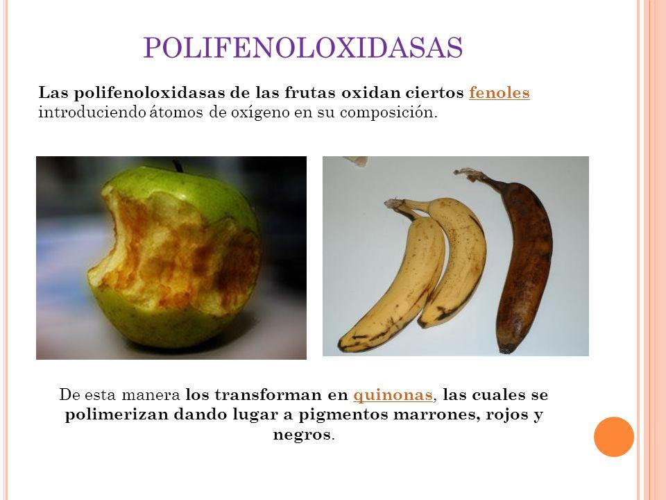 POLIFENOLOXIDASAS Las polifenoloxidasas de las frutas oxidan ciertos fenoles introduciendo átomos de oxígeno en su composición.