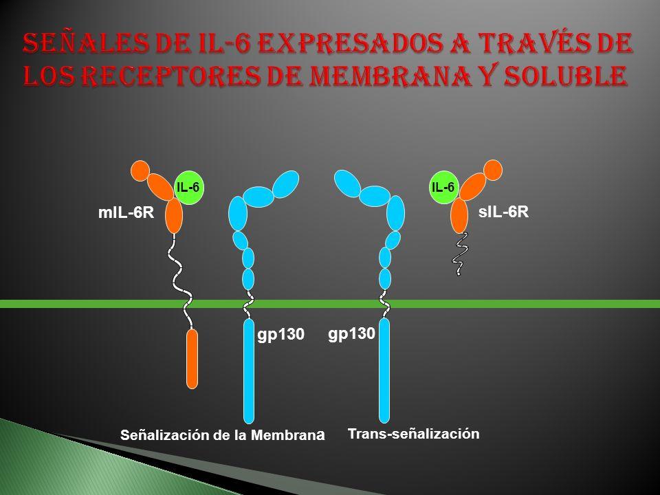 Señales de IL-6 expresados a través de los receptores de membrana y soluble