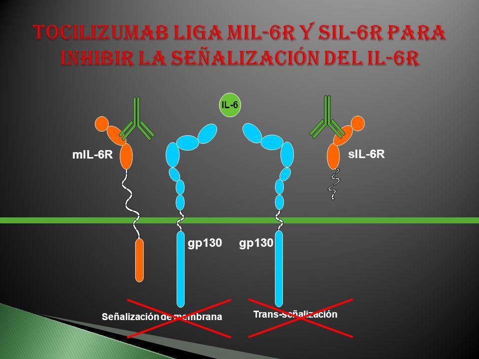 Tocilizumab liga mIL-6R y sIL-6R para inhibir la señalización del IL-6R