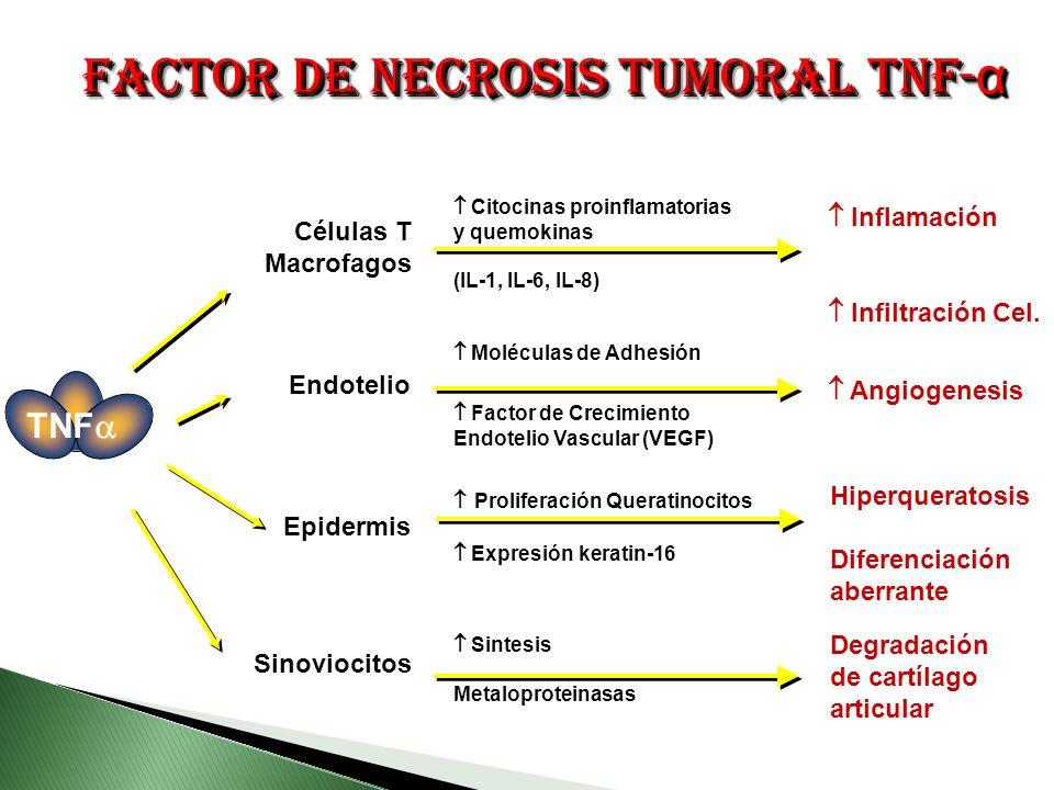 Factor de necrosis tumoral TNF-α