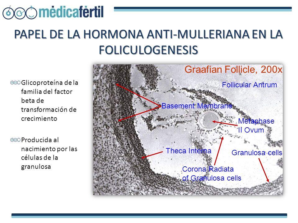 PAPEL DE LA HORMONA ANTI-MULLERIANA EN LA FOLICULOGENESIS