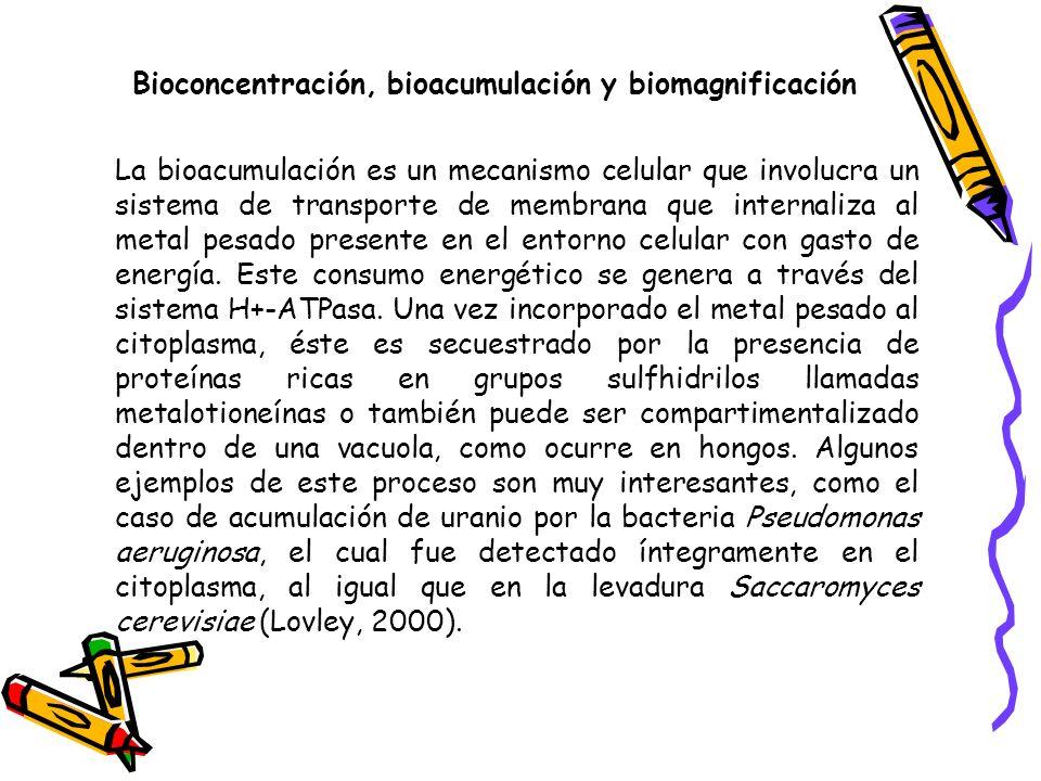Bioconcentración, bioacumulación y biomagnificación