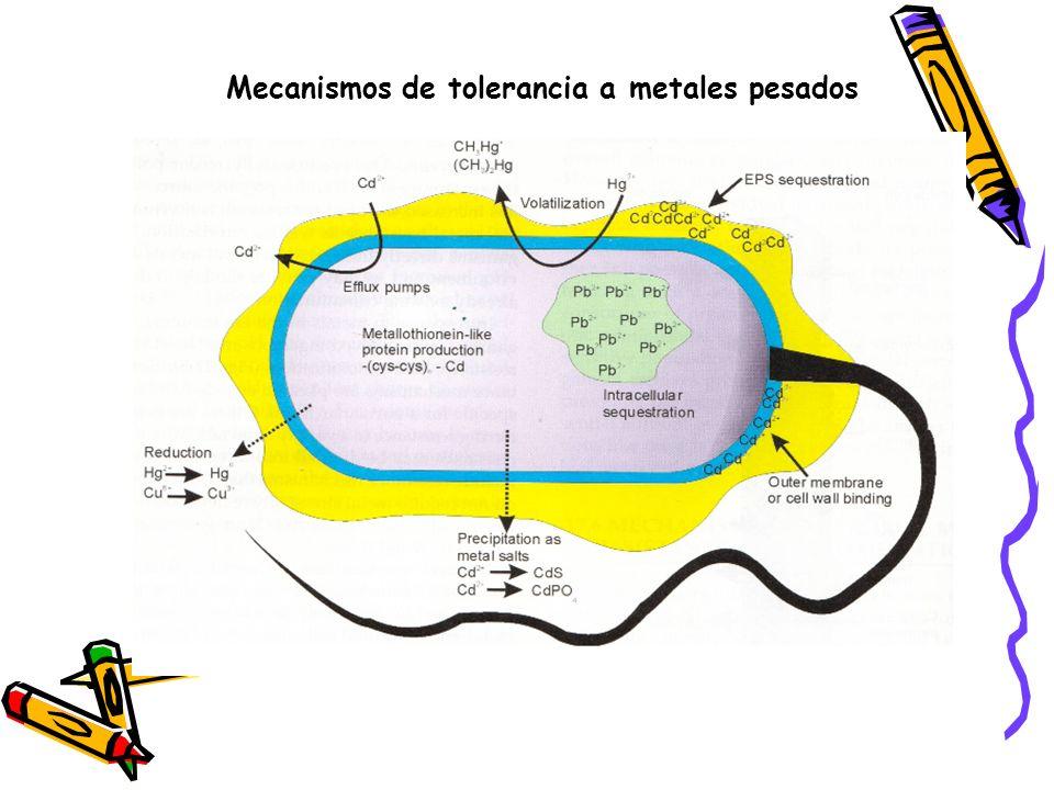 Mecanismos de tolerancia a metales pesados
