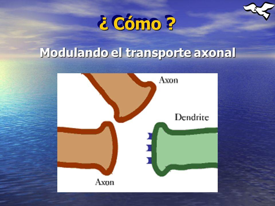 Modulando el transporte axonal
