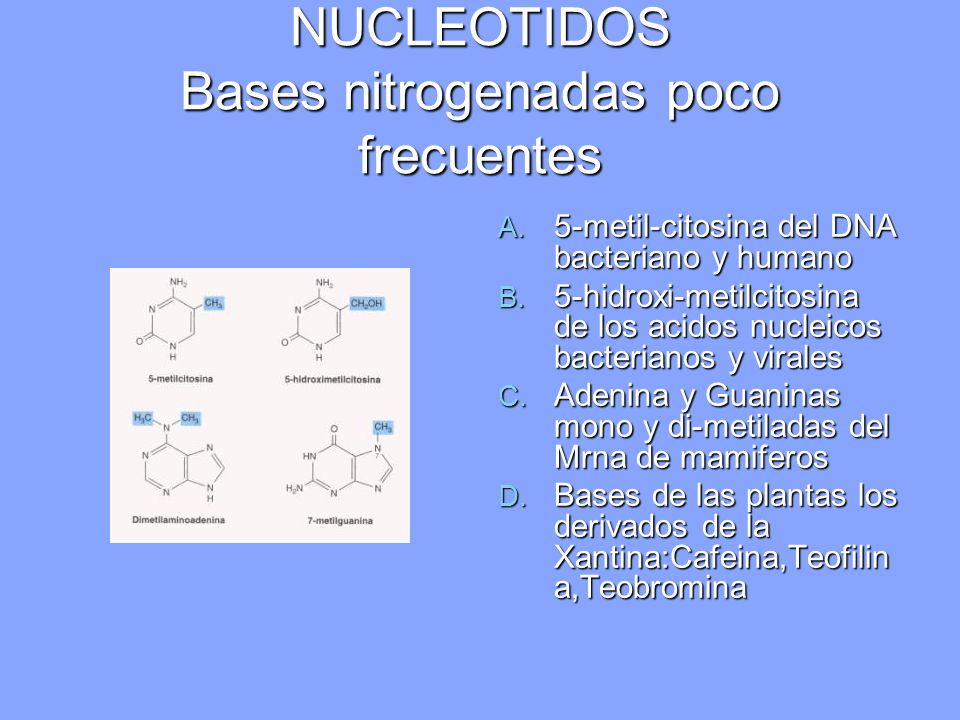 NUCLEOTIDOS Bases nitrogenadas poco frecuentes