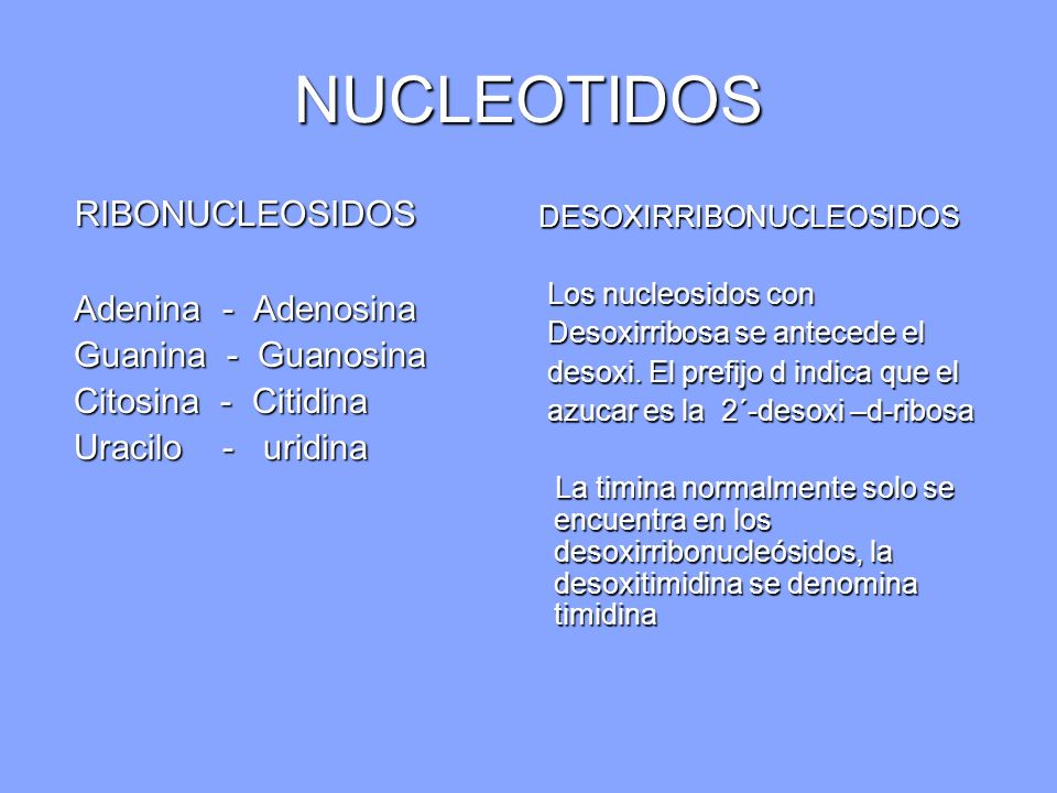 NUCLEOTIDOS RIBONUCLEOSIDOS Adenina - Adenosina Guanina - Guanosina