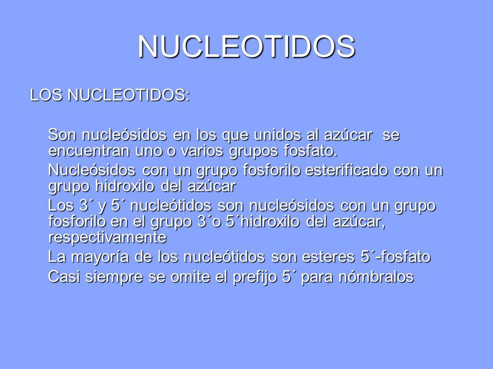 NUCLEOTIDOS LOS NUCLEOTIDOS: