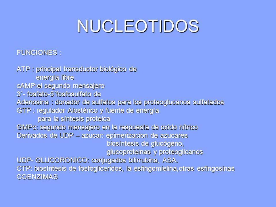 NUCLEOTIDOS FUNCIONES : ATP : principal transductor biológico de