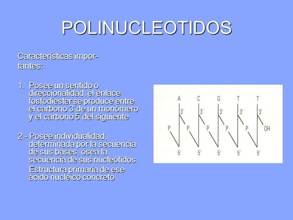 POLINUCLEOTIDOS Características impor- tantes: