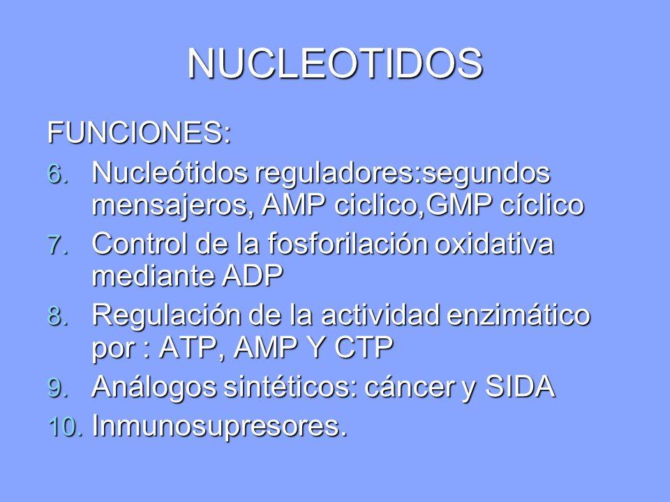 NUCLEOTIDOS FUNCIONES: