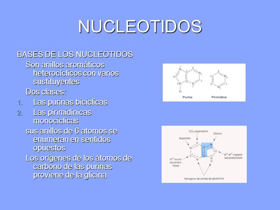 NUCLEOTIDOS BASES DE LOS NUCLEOTIDOS