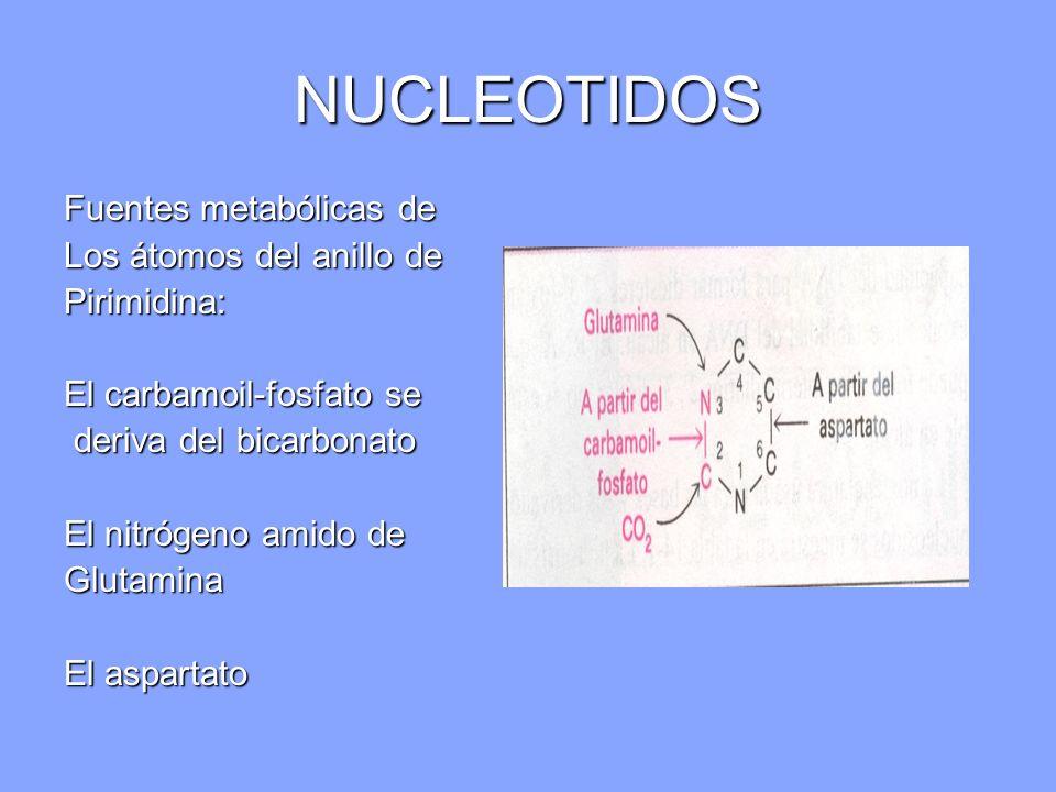 NUCLEOTIDOS Fuentes metabólicas de Los átomos del anillo de