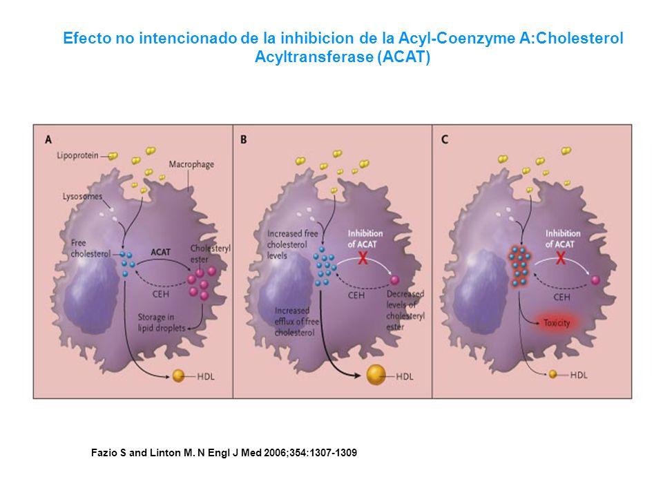 Efecto no intencionado de la inhibicion de la Acyl-Coenzyme A:Cholesterol Acyltransferase (ACAT)