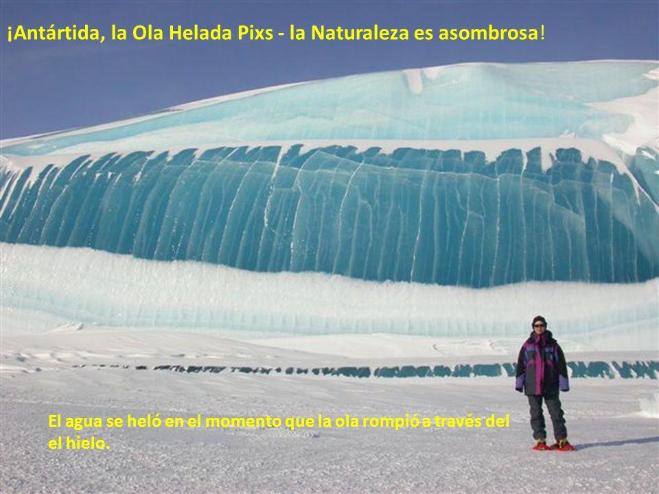 ¡Antártida, la Ola Helada Pixs - la Naturaleza es asombrosa!