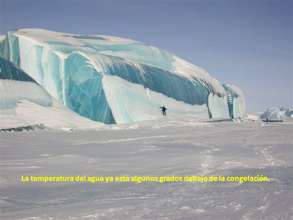 La temperatura del agua ya está algunos grados debajo de la congelación.