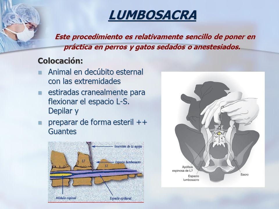 LUMBOSACRA Este procedimiento es relativamente sencillo de poner en práctica en perros y gatos sedados o anestesiados.