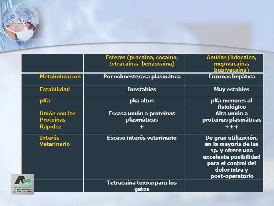 Esteres (procaína, cocaína, tetracaína, benzocaína)