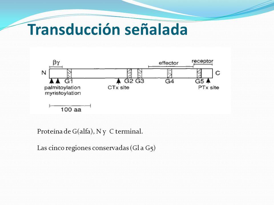 Transducción señalada