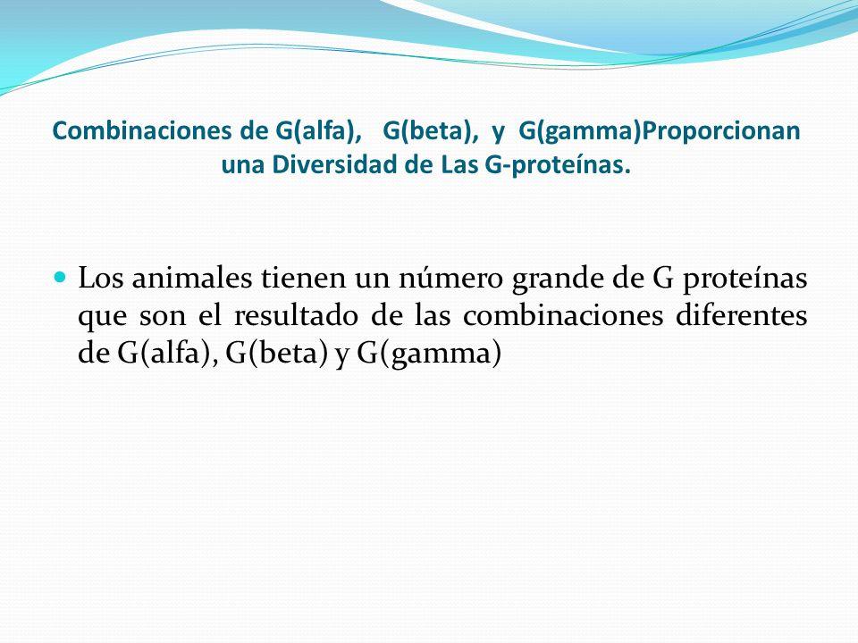 Combinaciones de G(alfa), G(beta), y G(gamma)Proporcionan una Diversidad de Las G-proteínas.