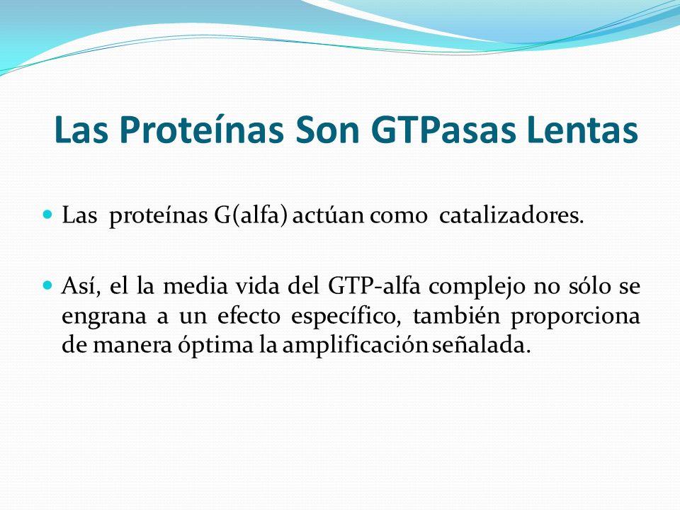 Las Proteínas Son GTPasas Lentas