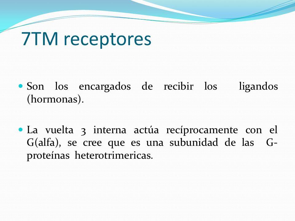7TM receptores Son los encargados de recibir los ligandos (hormonas).